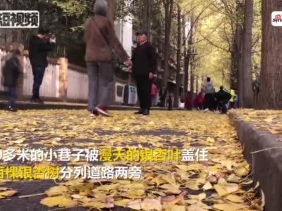 """视频丨成都""""银杏第一巷""""每天引数千市民打卡"""