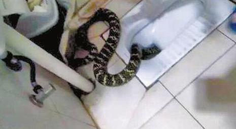 成都市民家中蹲便器钻出1米长蛇