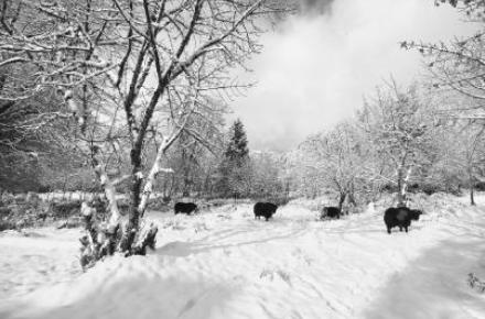 四川旅游冬季模式渐次开启——相比降雪 更令人惊喜的是降价