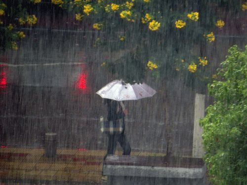 """""""谷雨""""雨水来""""抽查"""" 未来5天四川多阵雨或雷雨"""