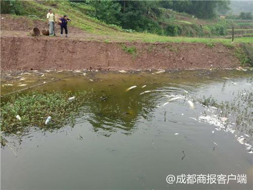 4.6万斤鱼疑缺氧暴毙身亡 鱼塘主称增氧设备未及时启用