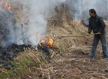 耕地烧荒引发山火毁数百亩林地 自贡一村民获刑
