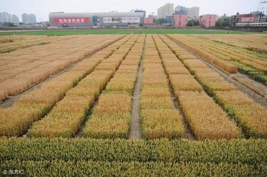 成都将设立农业科技中心 建立国际一流农业农村人才培养基地