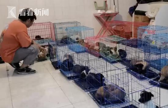 成都宠物盲盒救援者:志愿者暗访半个月确认事实