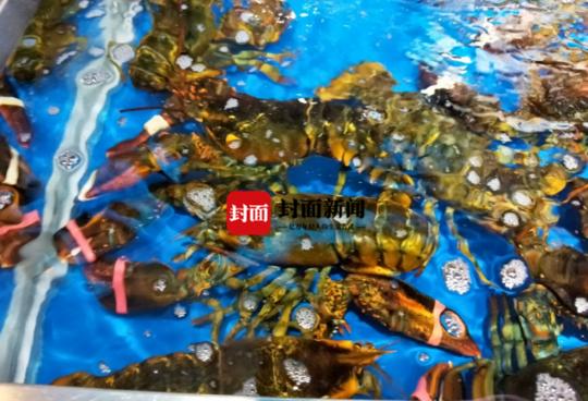 成都盒马鲜生螃蟹被曝绑橡皮筋 消费者:可以接受