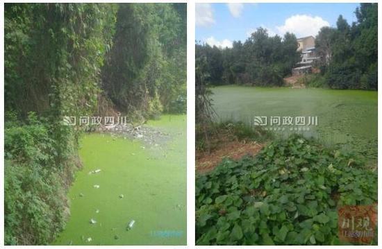 网友投诉村民养猪致环境污染 后续:责令整改,加强监管