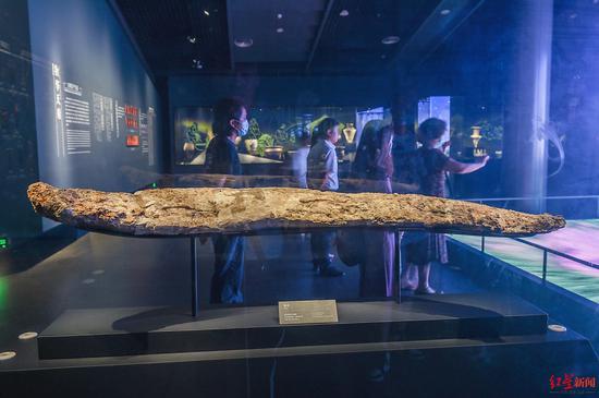 ↑9月6日,四川广汉,三星堆博物馆展品:象牙