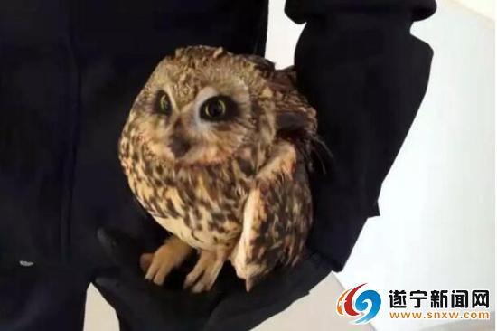 受伤大鸟竟是国家二级野生保护动物 遂宁民警热心为它找新家
