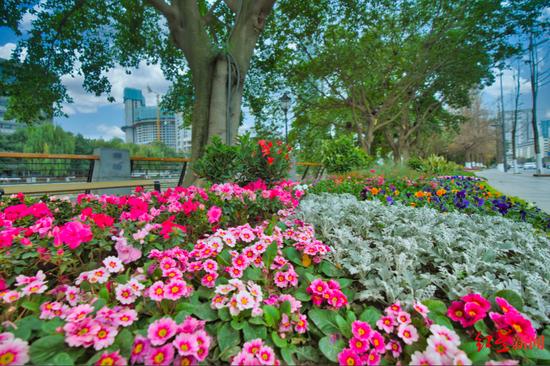 四川将用5~10年打造千亿级花卉产业 温江龙泉驿新津被划重点