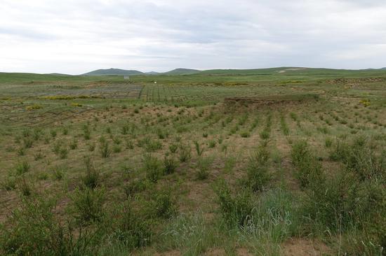 四川大战荒漠化 五年投入近20亿元治理土地超400万亩