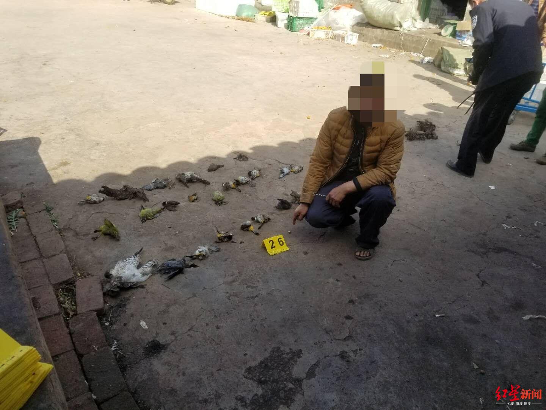 捕捉33只蝙蝠 违法嫌疑人被居家隔离作疫情防控观察