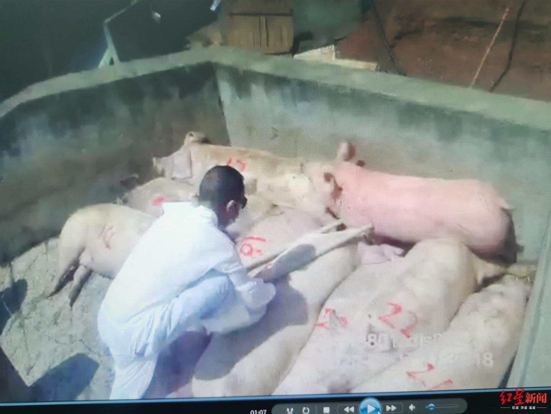 7座面包车一直晃动还发出恶臭 高速交警一查竟塞了23头猪