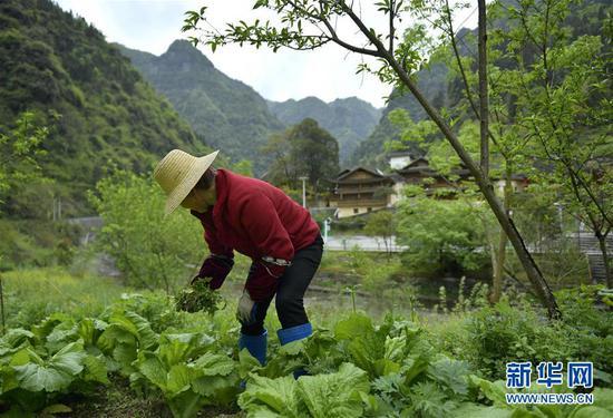 村民在管护田园