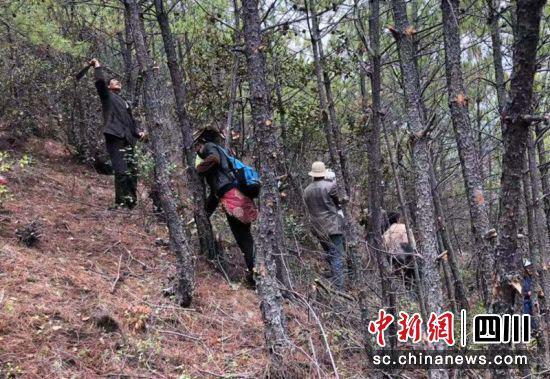 甘孜州稻城:村民收拾自留地须扫码进山