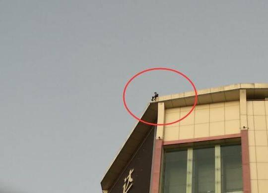 男子闹市区欲跳楼轻生被劝下 因扰乱社会公共秩序被行拘