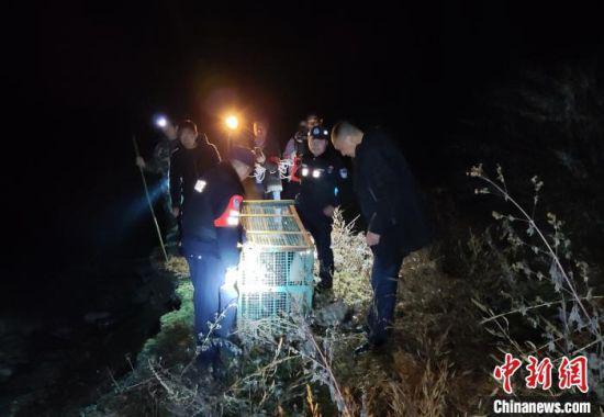 救助野生大熊猫 雅安警方 供图