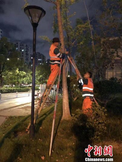 城管工作人员为杭州的树木加固支撑。江干区城管局 供图