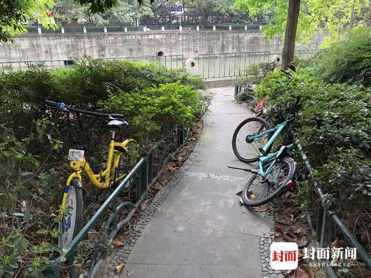 共享单车占道汽车停车位 被停车收费员扔进绿化带