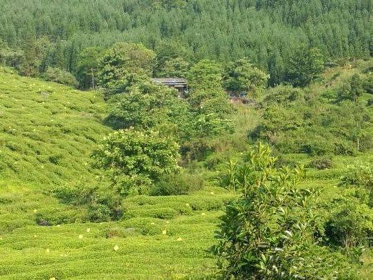 如电影大片般精彩!四川警方揪出茶山里的制毒工厂