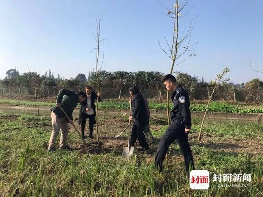 砍伐高速边行道树 男子被追刑责还亲手种了150株银杏树
