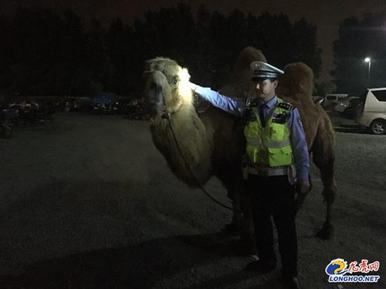 货车司机车载骆驼拍照赚钱 闯红灯被警方查出是网逃