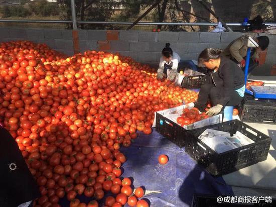 让这些农副产品告别滞销 四川将创建贫困地区公益性集体商标