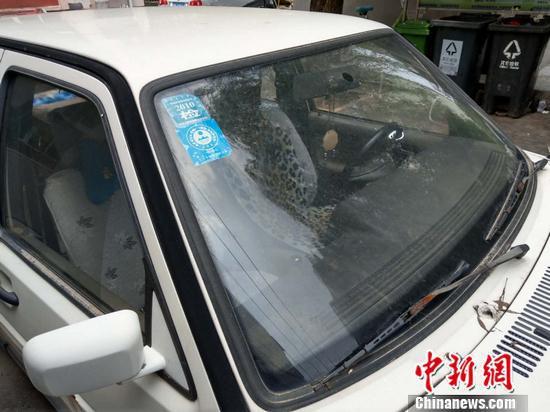北京枣营北里小区内停放的僵尸车,最新的年检标志为2010年。张旭 摄