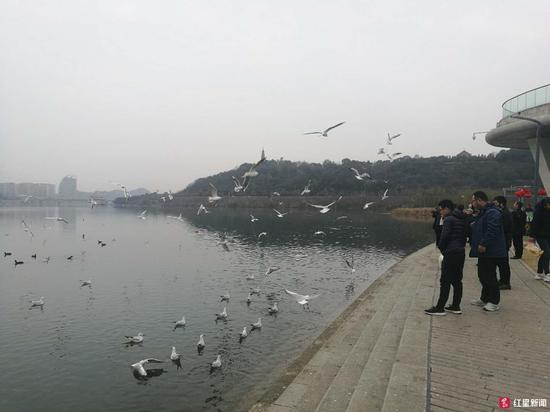 市民绵阳三江湖国家湿地公园内喂鸟,图据记者