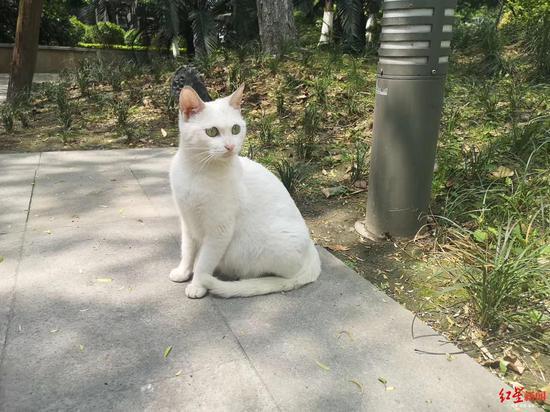 小区要驱逐野猫业主建起保护群 物业:主要想为猫找领养者