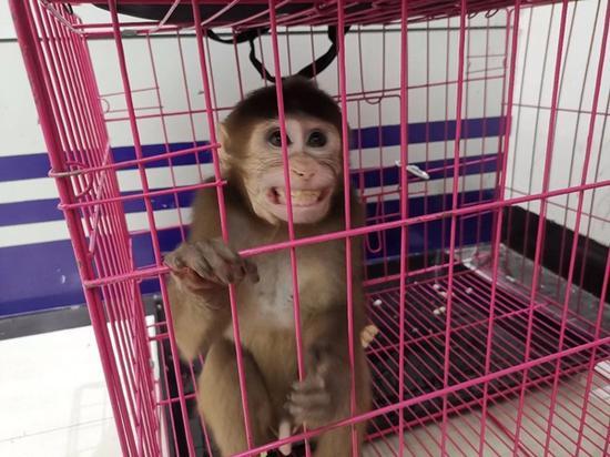 泸州破获猎捕贩卖野生动物案:拯救一只小奶猴发现22具动物死