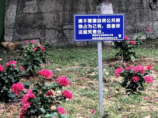 改进前的用铁丝固定花卉陈冠宇 摄