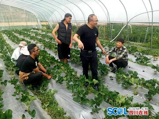 信沟村来了个草莓党员干部,袁光良。个人供图。