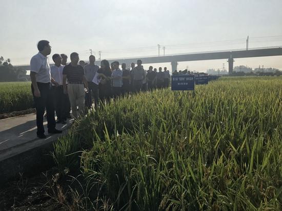 擦亮川米金字招牌 四川将在40个重点县推广稻香杯优质品种