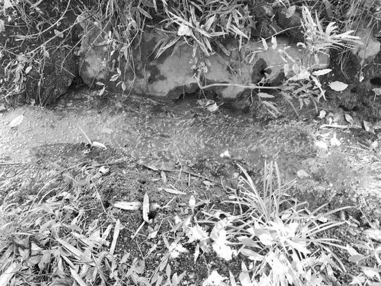 村民:水沟污水流淌臭得不敢出门