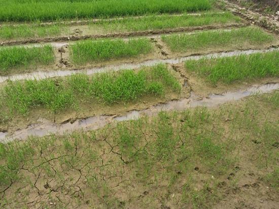 四川整体旱情已趋于中旱 农作物受旱面积352.2万亩