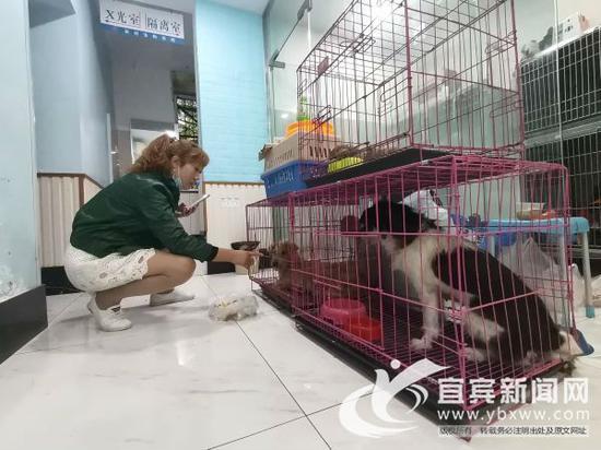 爱狗人士来喂流浪狗。(记者 何东 摄)