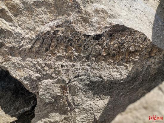 ↑宜宾发现的化石