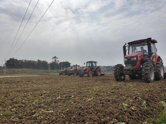 岳池县今年将种植1000亩米粉专用稻