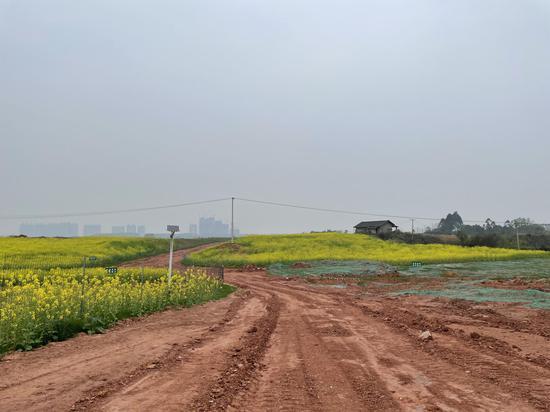 整理撂荒土地种植粮油作物的同时,金炜的公司还要修路。新京报记者 李桂 摄