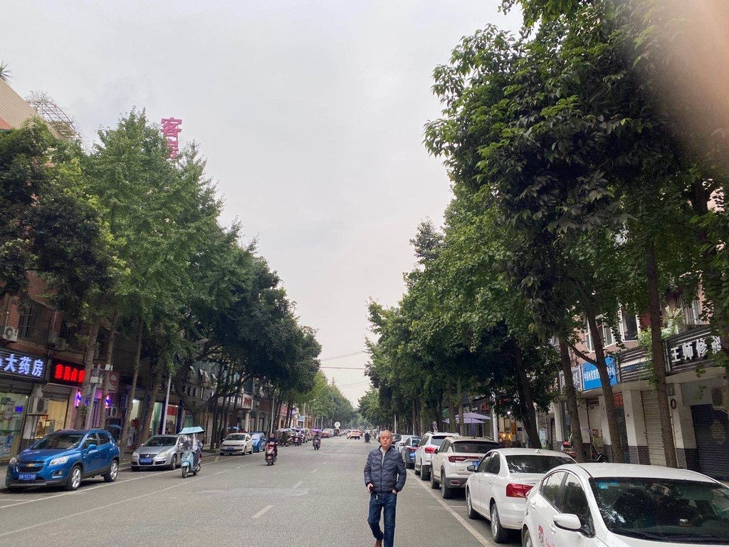 问政|成千上万的鸟儿为什么只认这条街?