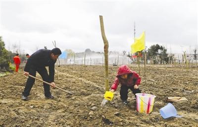 今年植树节,6岁的石景熠和爸爸一起种下一株木芙蓉 摄影记者 刘海韵