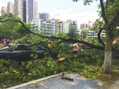 狂风吹断大树,砸中南充茂源南路口经过的车辆。