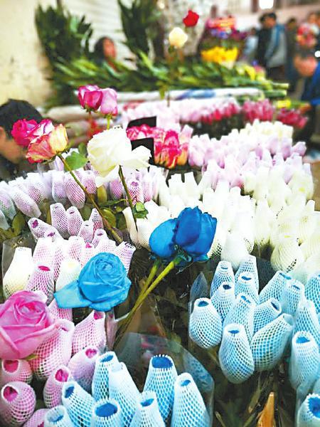 斗南花市的优质鲜花,也有部分来自西昌。