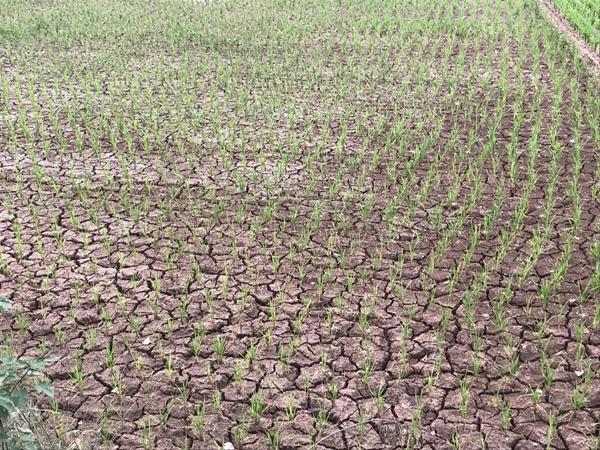 自贡遭遇春夏连旱 未来10天仍以多云天气为主