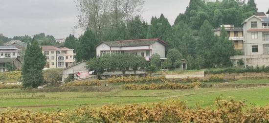 梓桐村村庄