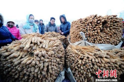 甘肃岷县中国当归城内中药材交易场景。杨艳敏 摄