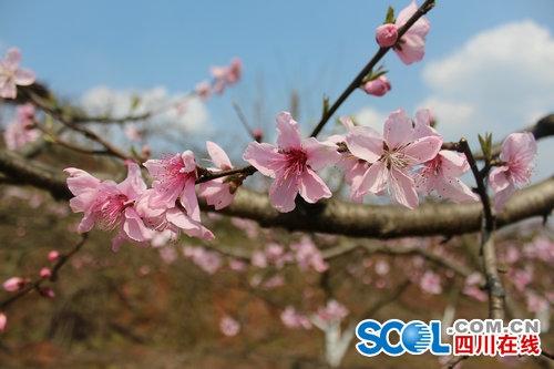 万亩桃花竞开向您发出春天邀请