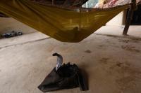 云南澜沧江边放生一袋蛇 男子涉嫌违法被立案调查