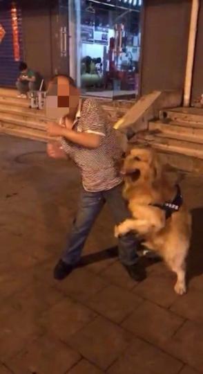 图为金毛犬正在扑扒路人。 网络视频截图 摄