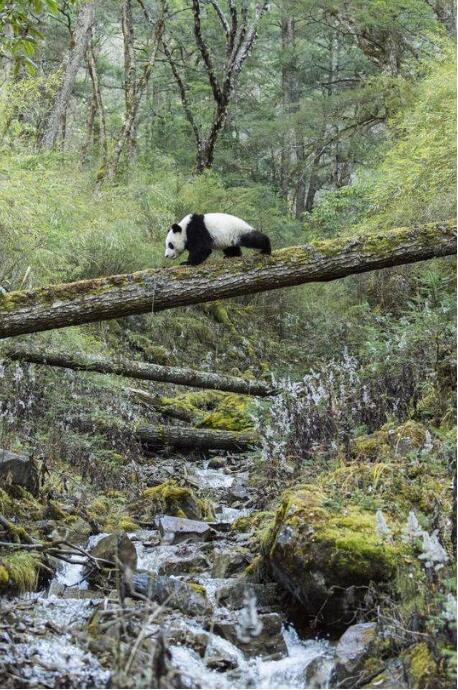 我擅长爬树